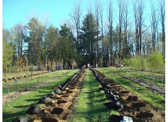 Burlington Community Tree Nursery Readyforplanting