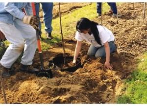 plantinghole